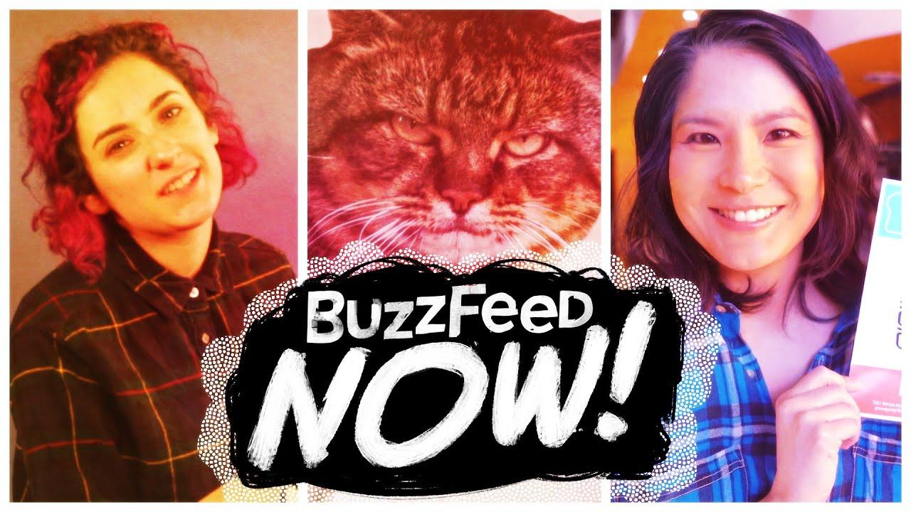 Buzzfeed Cats Vs Dogs