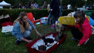 Приют для животных «Ника» на Дне города