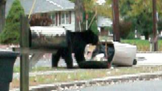 Black Bear Oakland NJ