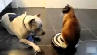 Животные и роботы пылесосы  Смешное катание на пылесосе