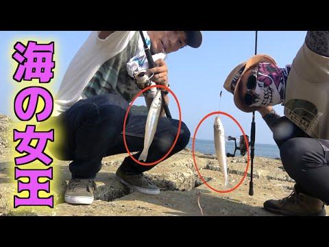 キス釣りに行ったら念願の爆釣モードに入った!!