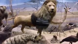 видео Дарвиновский музей