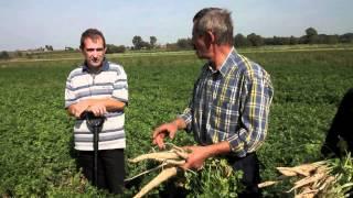 Środki ochrony pietruszki przed ordzawieniami. Uprawa i pielęgnacja roślin.