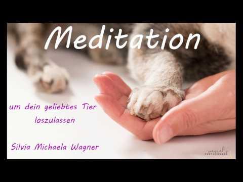 Meditation um dein geliebtes Tier loszulassen
