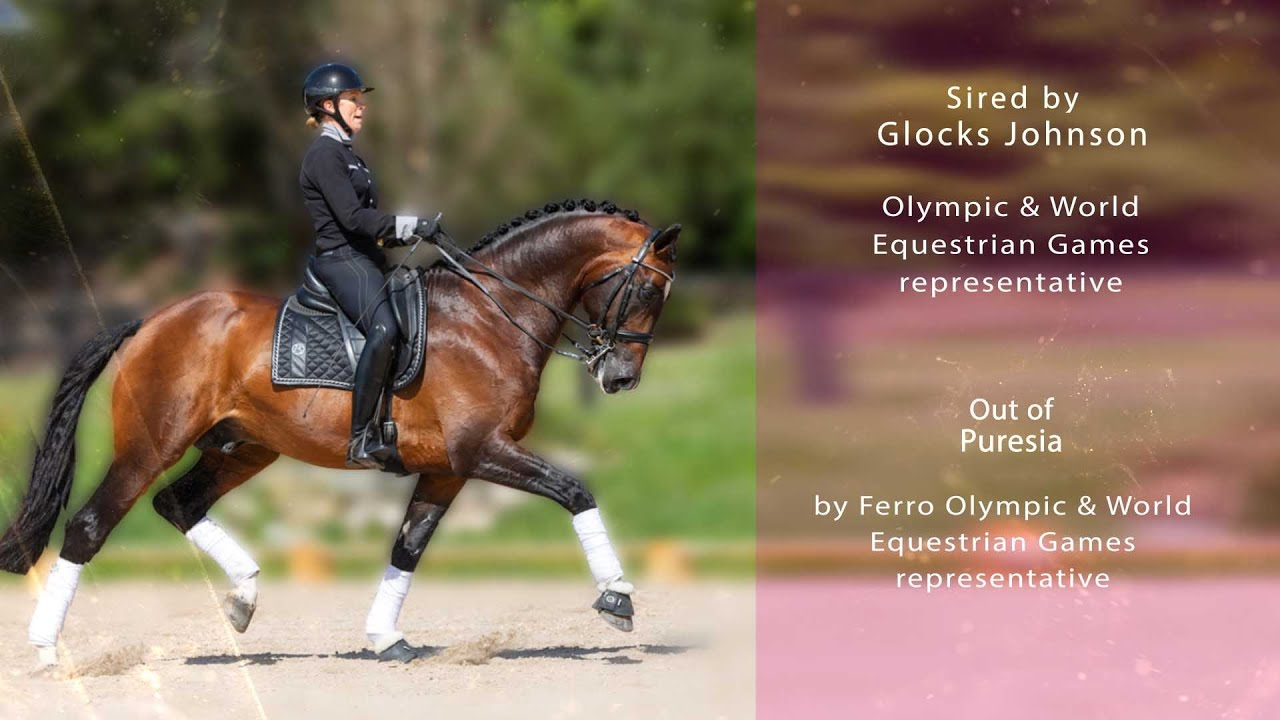 Iresias L | Stallion Video | Sport Horse Films Australia