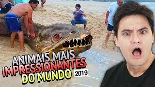 ANIMAIS MAIS IMPRESSIONANTES DO MUNDO