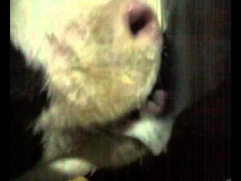 porn video HD Free lela star porn full movie