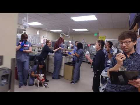 ACCESS Specialty Animal Hospital Mannequin Challenge - San Fernando Valley
