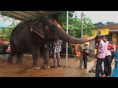 Seeking blessings of an Elephant