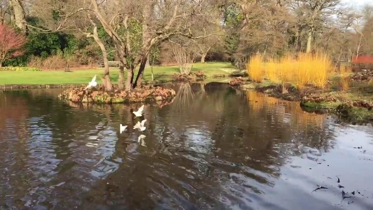 savill garden in winter feb 2017 windsor great park englefield