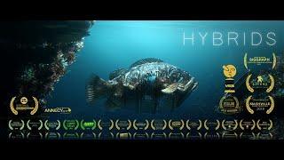 HYBRIDS - FILM