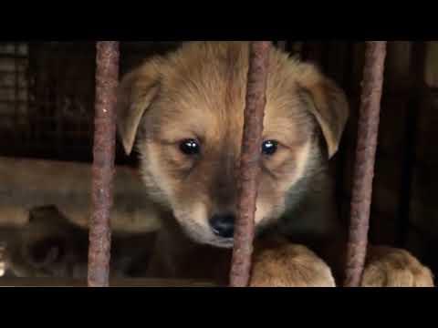 Winter Olympics shines spotlight on dog meat trade in South Korea