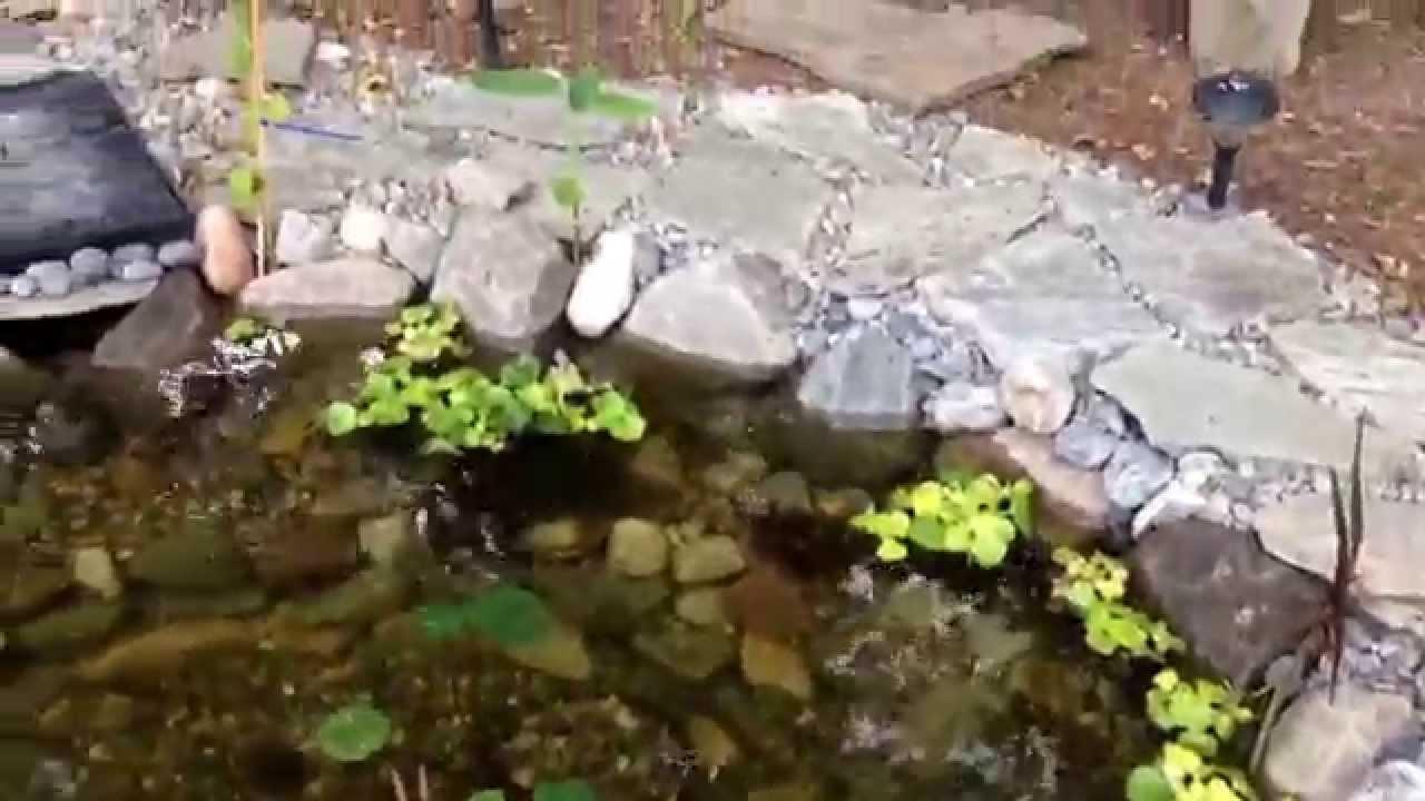 1500 gallon koi pond youtube for Koi pond gallons