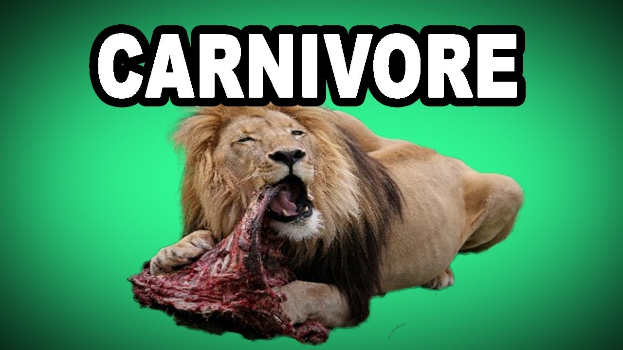 Learn English Words Carnivore Meaning Vocabulary With