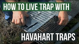 How To Trap Animals With A Live Trap Havahart