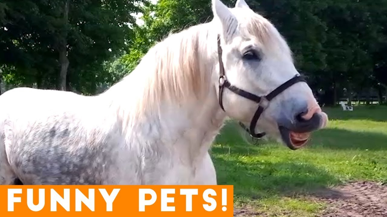 Funniest Pets & Animals of the Week Compilation May 2018 | Hilarious Try Not to Laugh Animals Fa