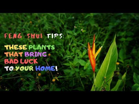 Feng Shui Tips: These Plants That Bring Bad Luck To Your Home!