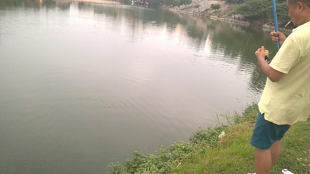 Đồ Câu Sinh Viên | Câu lục tại hồ tây vớ phải cá trôi to