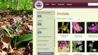 Go Orchids: A Guide to Identifying Orchids