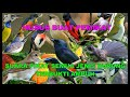 Suara Pikat Semua Jenis Burung Terbukti Sangat Ampuh Gacor(.mp3 .mp4) Mp3 - Mp4 Download