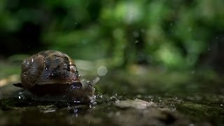 Snails Time-lapse - The Great British Year: Episode 3 Preview - BBC One