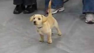 Lizzie, Dachshund Rat Terrier Mix, Puppy Pre-school