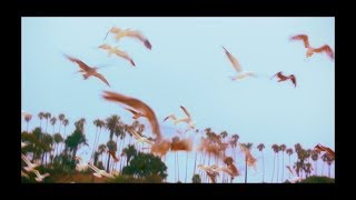 Weezer   Mexican Fender Sub Español Ingles :)