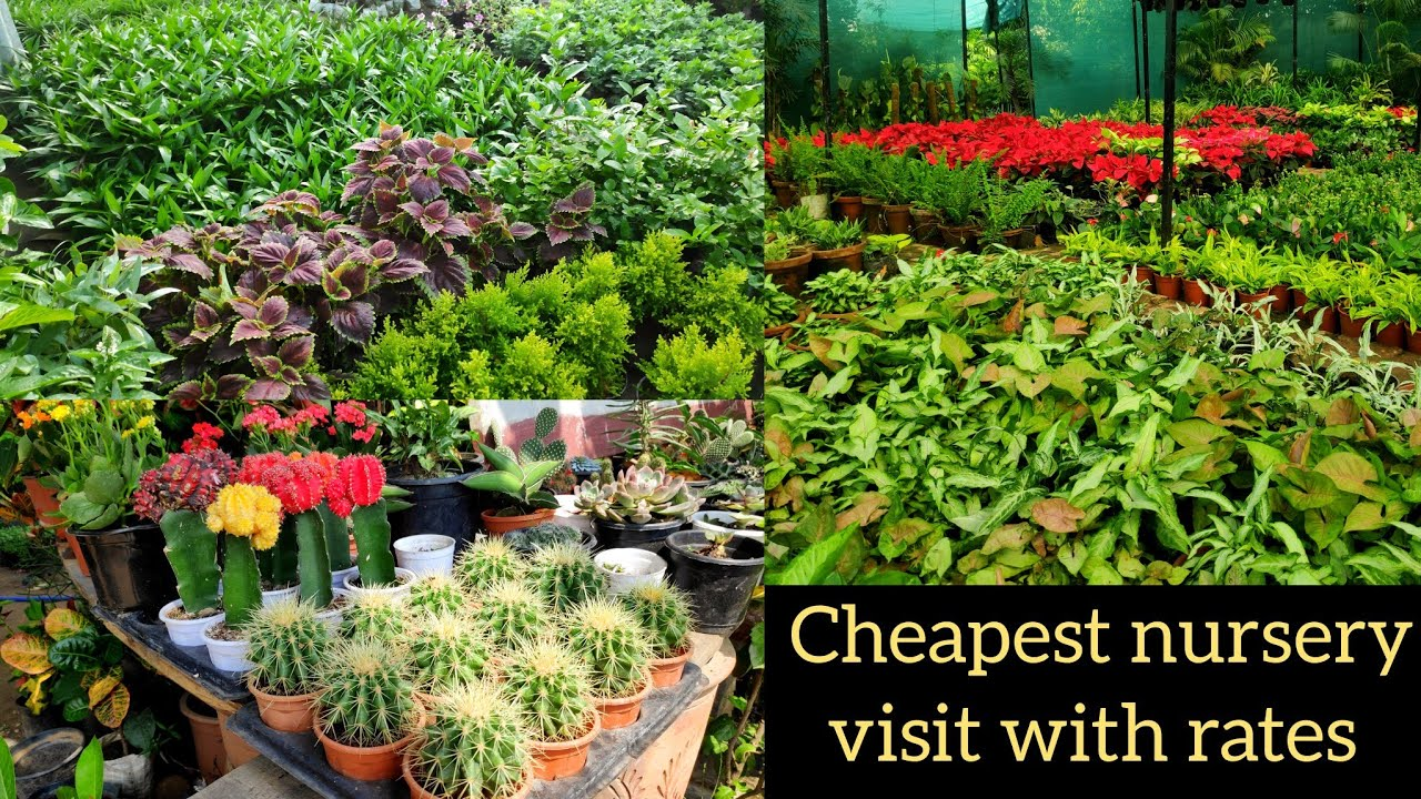 Cheapest roadside nursery visit with rates, एक नई नर्सरी की सैर, indoor plants names