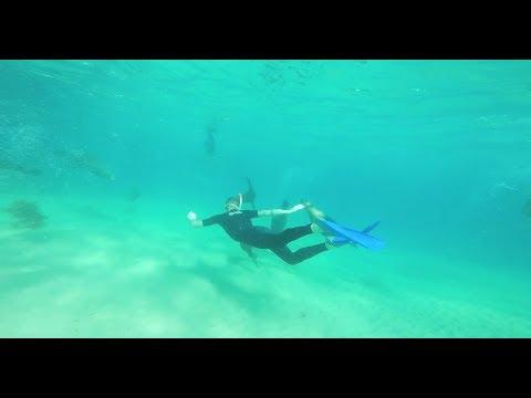 Bellarine Life -  Sea All Dolphin Swims