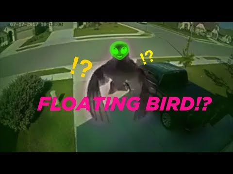 How This Bird Floats Without Flapping Its Wings