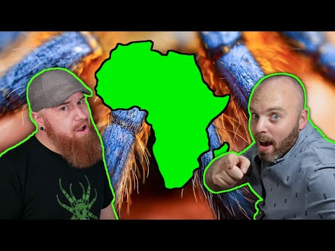 Keeping Tarantulas in South Africa w/ Mikes Exotics