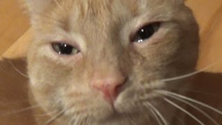 CAT CRYING WITH TEARS