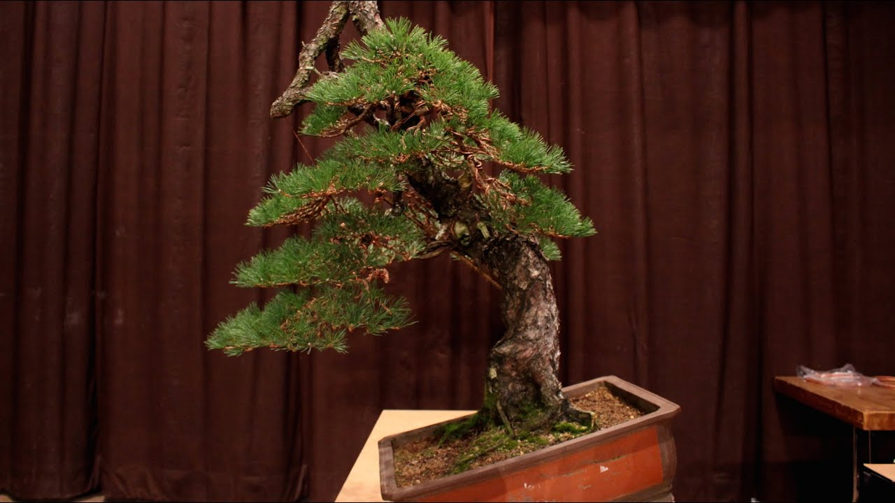El Tim Demo Youtube Bonsai Wiring Empire