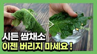 한국인 쏘울문화 쌈 !  쌈채소 이제는 알고 드세요 |…