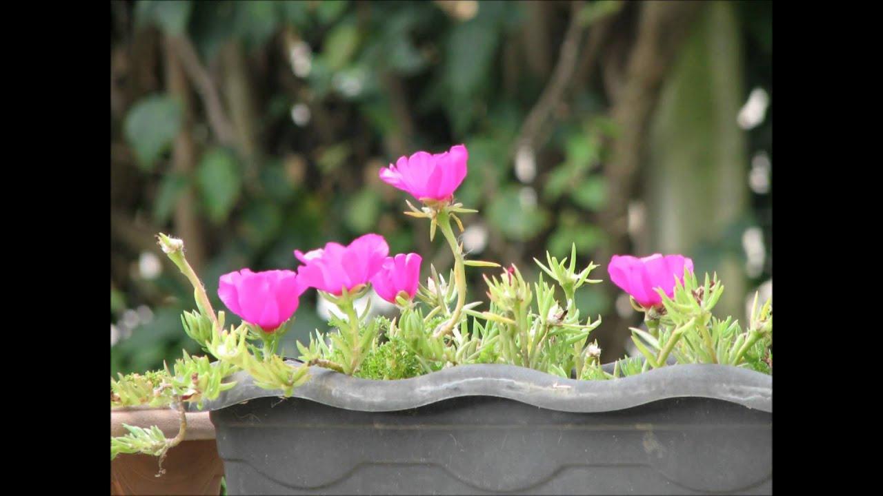 Uma Flor De Bom Dia: Flor Onze Horas