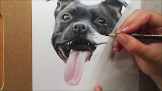Violet Staffordshire Bull Terrier Colour Pencil Drawing