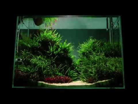 Altitude Aquascape by James Findley - The Making Of