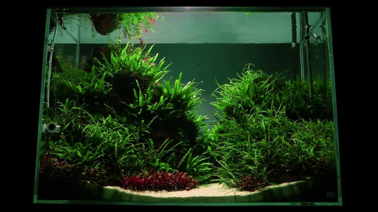 Altitude Aquascape By James Findley   The Making Of   YouTube