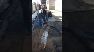 В Кыргызстане парень зарезал дерево живым