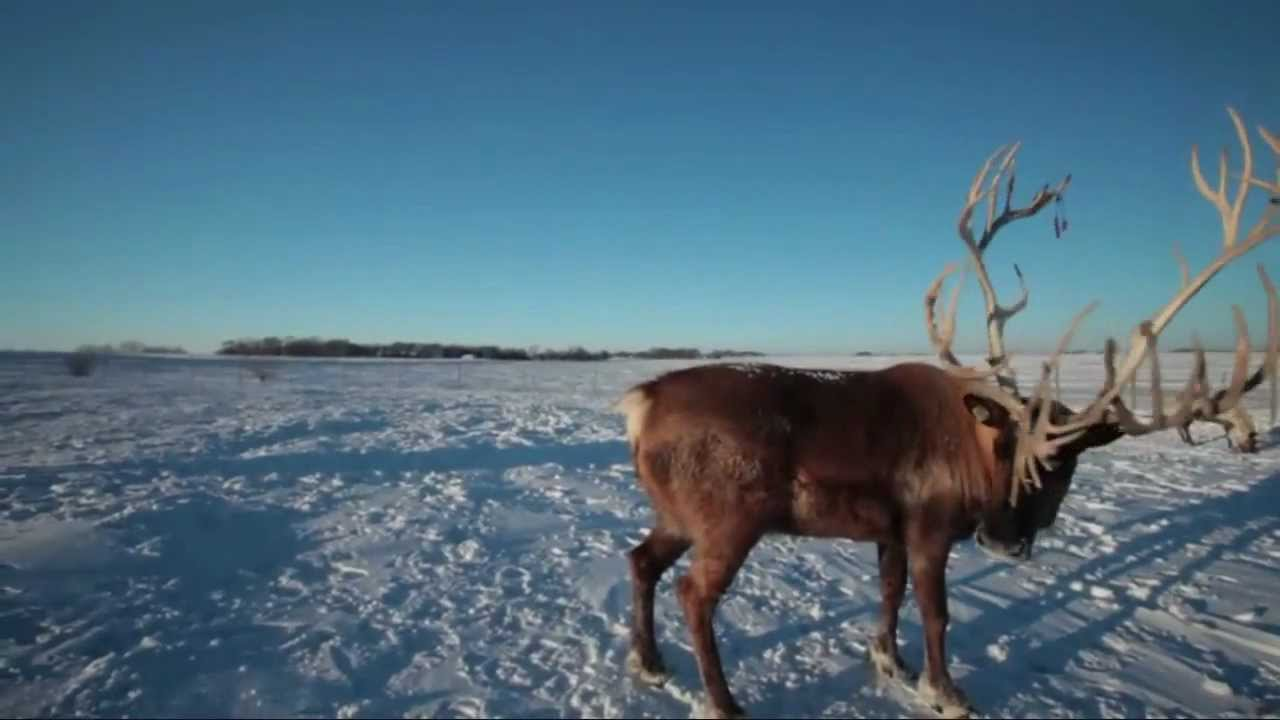 Rudolph, the Red-Nosed Reindeer (HD) - YouTube