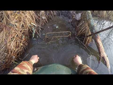 охота на бобра установка проходного капкана на выходе