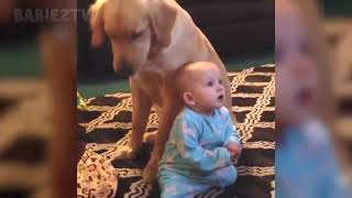 Adorable babies playing with dogs and cats funny babies 2019