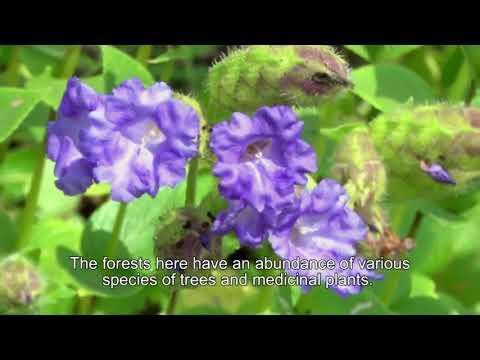 Biodiversity Hot spot  of Sindhudurg - Amboli