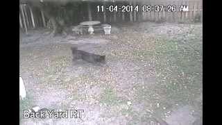 Squirrel VS Wolfdog (Short Version)
