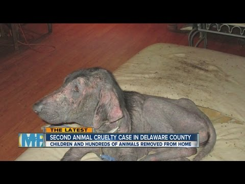 5 Children and 300 animals rescued from Delaware home in animal cruelty case.
