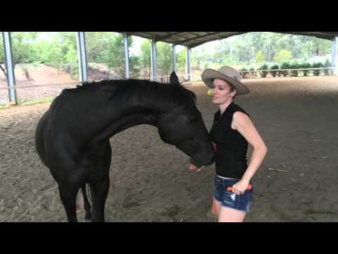 JUST GREAT: 10 Horse Tricks In 2 Minutes!!!
