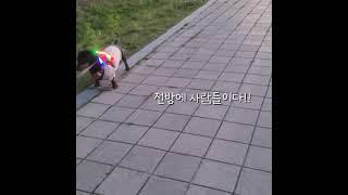 [겨울일상]# 114 닥스훈트○●산책 인싸템●○ 1살강…