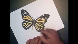 Butterfly Speed-Drawing 3D