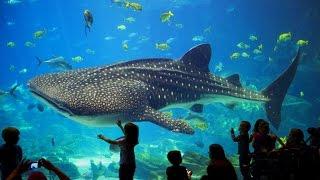 ОКЕАНАРИУМ Видео ВЛОГ. Океанариум. Животные. Джунгли. Детский канал Расти вместе с нами.