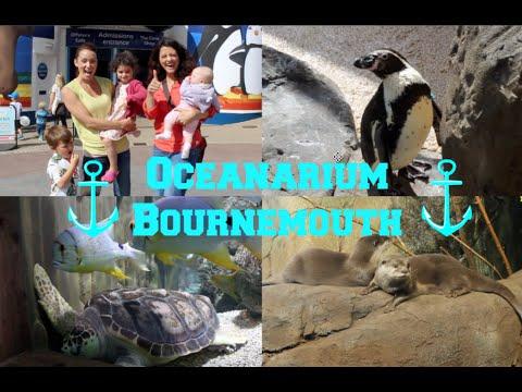 Oceanarium Bournemouth - Penguin enclosure Review